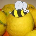 ape-su-limoni-IMG_4811-1024x575-150x150