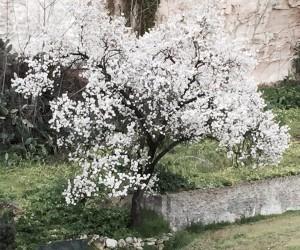Primavera 5 3 15