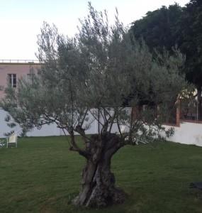 albero orto cap