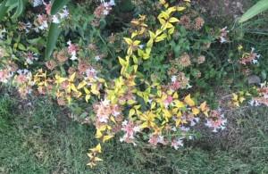 fiori 21 8 16