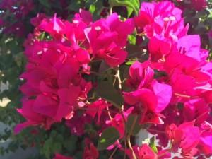 fiori in villaggio 4 9 16