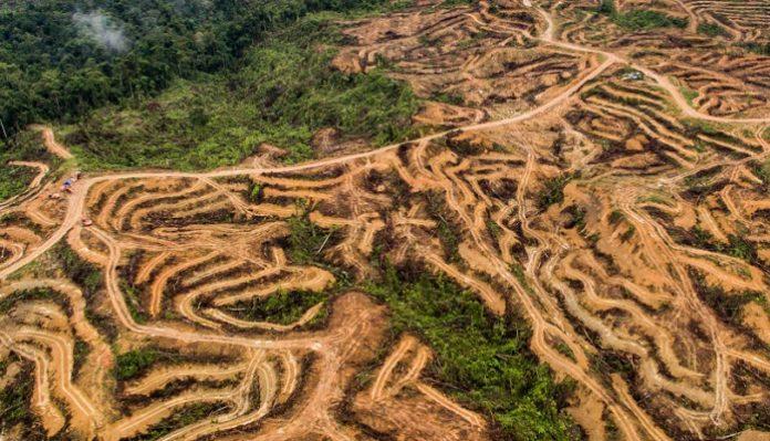 vue-aerienne-de-la-deforestation-huile-de-palme-sumatra-indonesie-nanang-sujana-ran-696x399