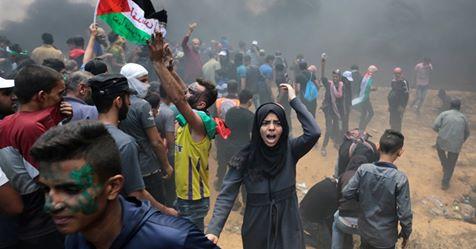 palestin-afe_image