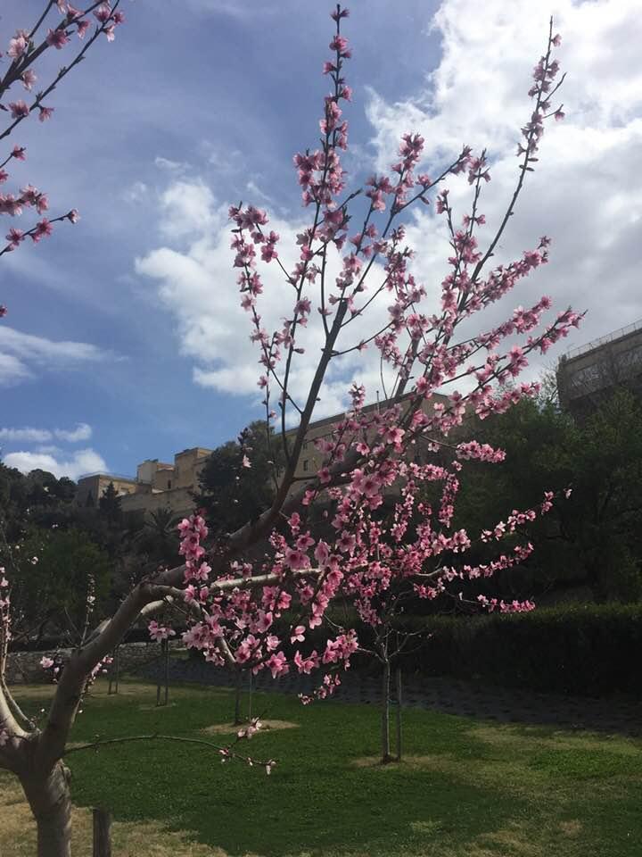fiori-di-p1